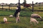 Zwierzęta gospodarstwo agroturystyczne