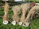 Kłosy i ziarna gospodarstwo agroturystyczne