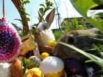 Wielkanoc z królikiem