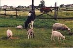 Zwierzęta w gospodarstwie agroturystycznym